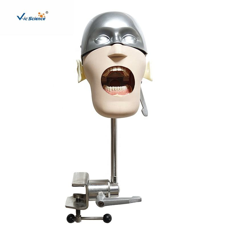 Advanced Dental Phantom Training Simulators Head Phantom Medical Science Teaching Model