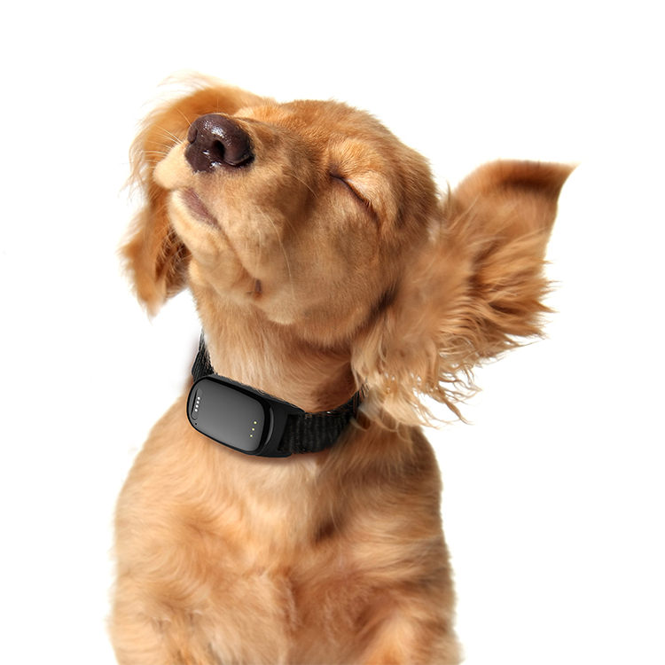 Eview Best Buy GPS Tracking Chip Real Time Puppy Cat GPS Tracker Collars Pet Locator with APP