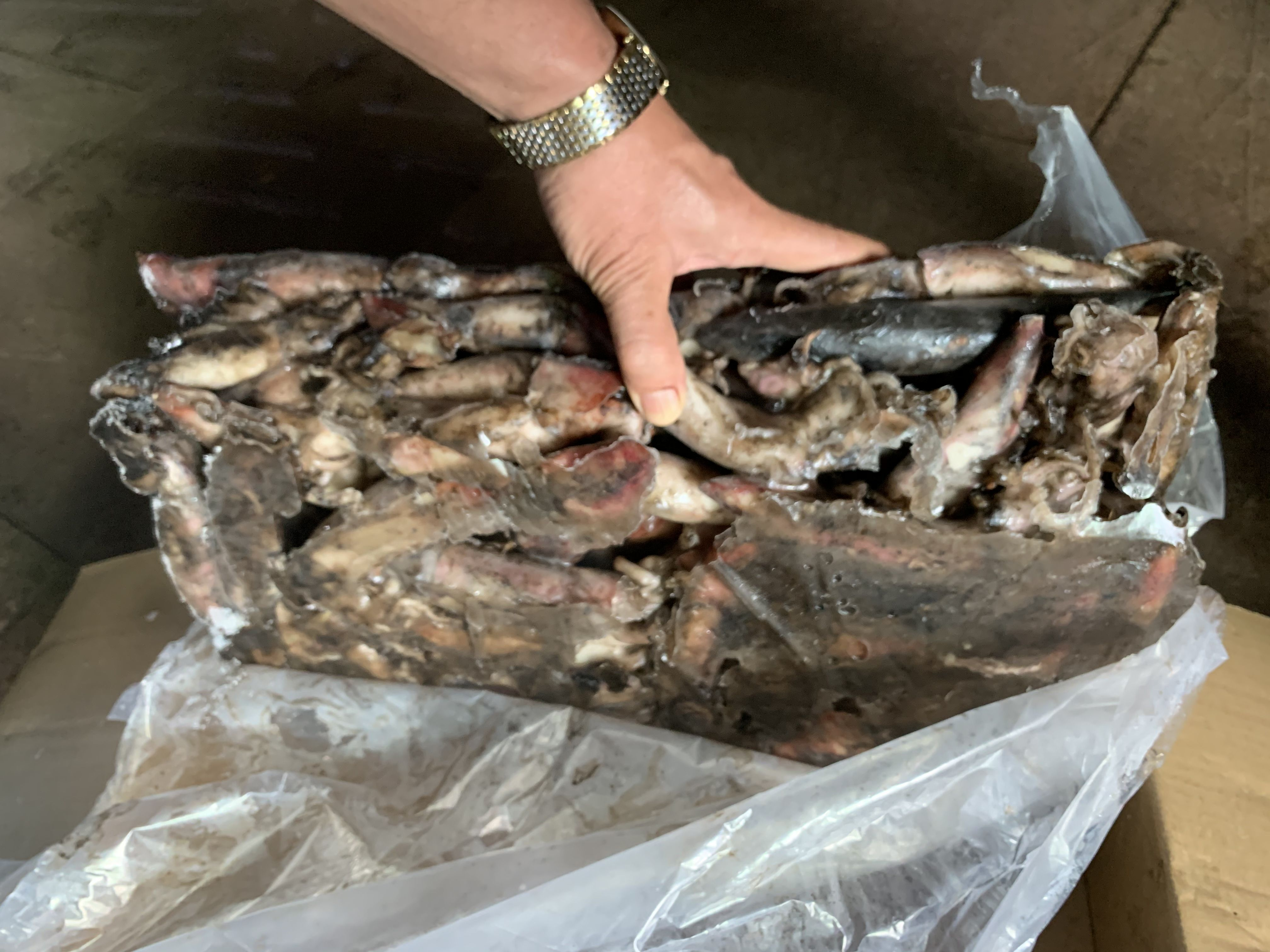 Black Squid New Stock Frozen Black Squid With Low Price For Market