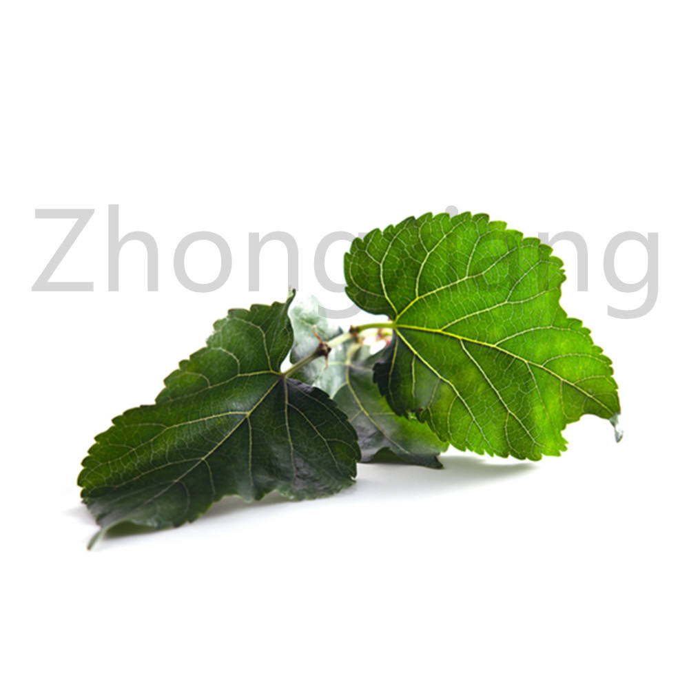 Manufaturer Natural and Pure Plant Extract Mulberry Leaf Oil For Candles