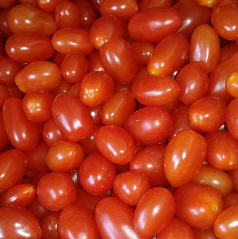 Yes Hybrid F1oval red salad tomato seeds China