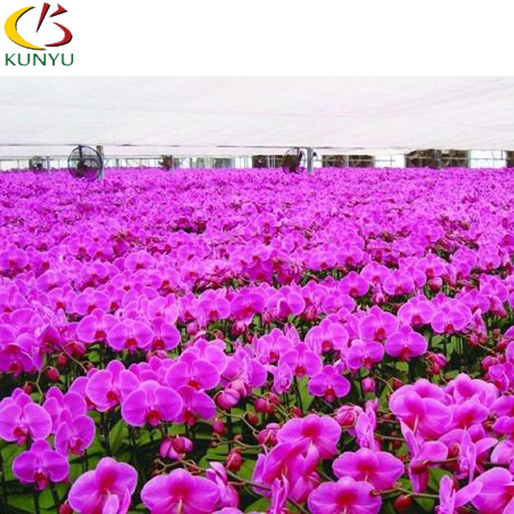 Hot sellingTaiwan orchid Hot sale orchid plants phalaenopsis orchid seedling for sale