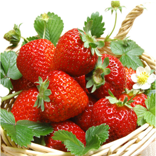 Many Kinds of High germination Fruit Seeds/Vegetables Seeds/strawberry seeds