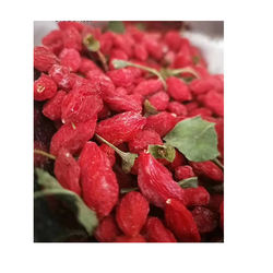 High Quality wholesale New crops organic goji berries