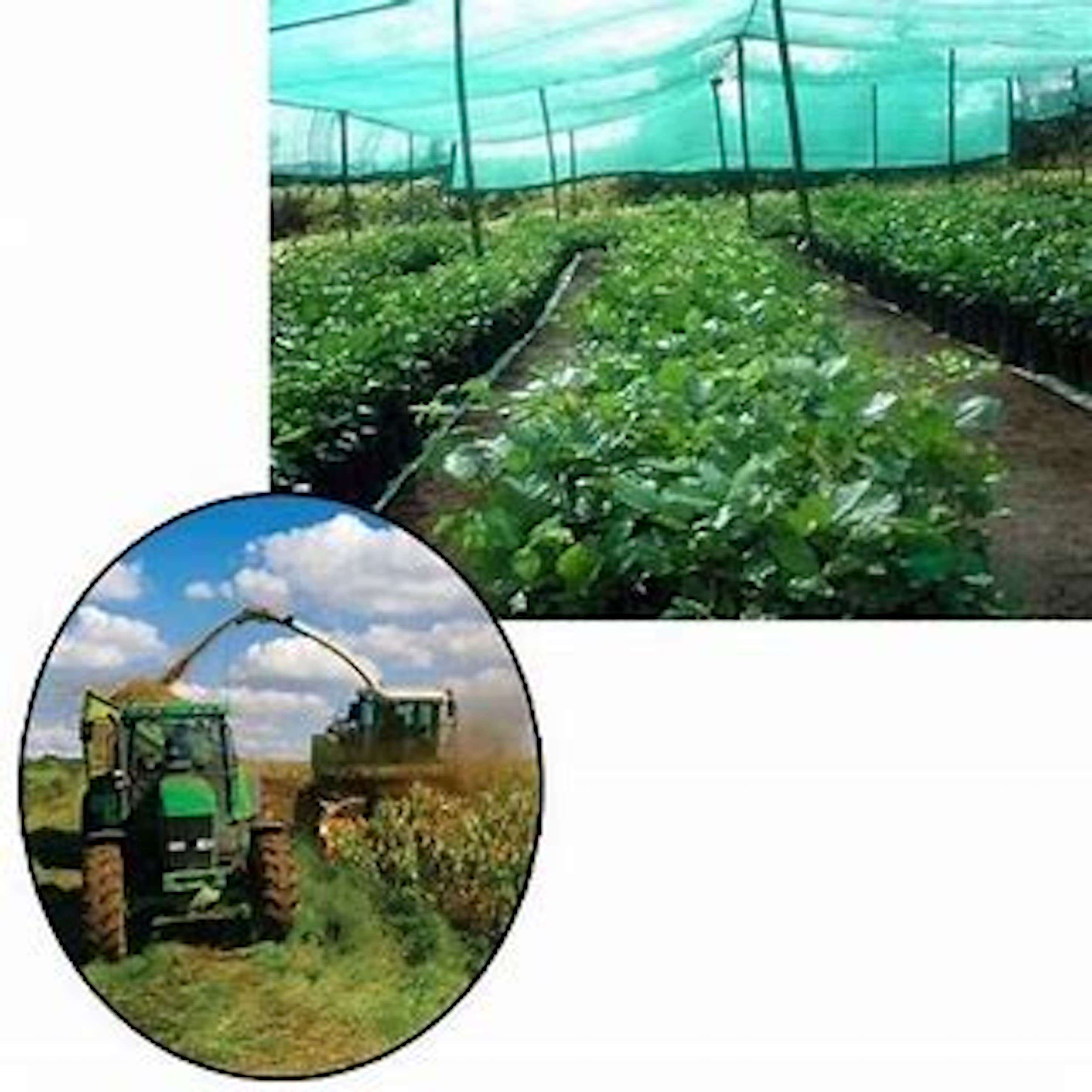 wholesale agro mono shade net plastic shade net agricultural shade net supply available near champapet in