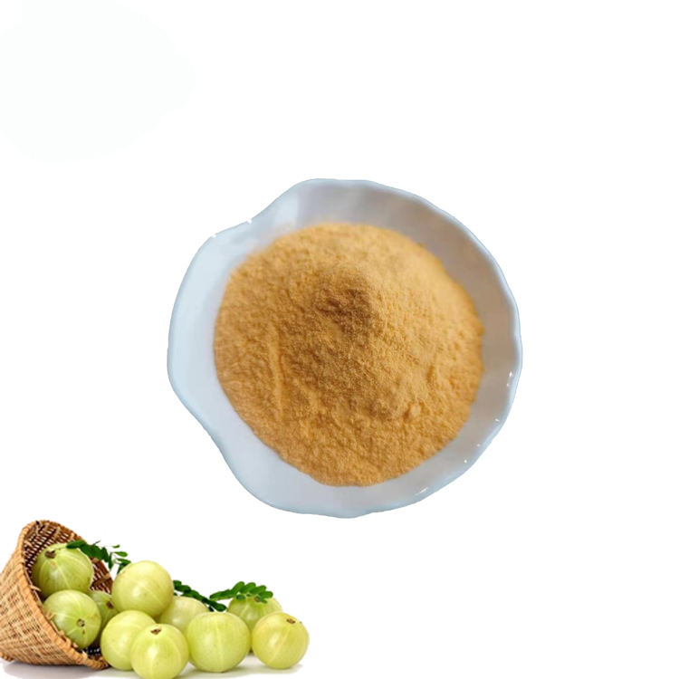 Manufacture supply 100% Natural Amla Fruit Powder /Phyllanthus emblica