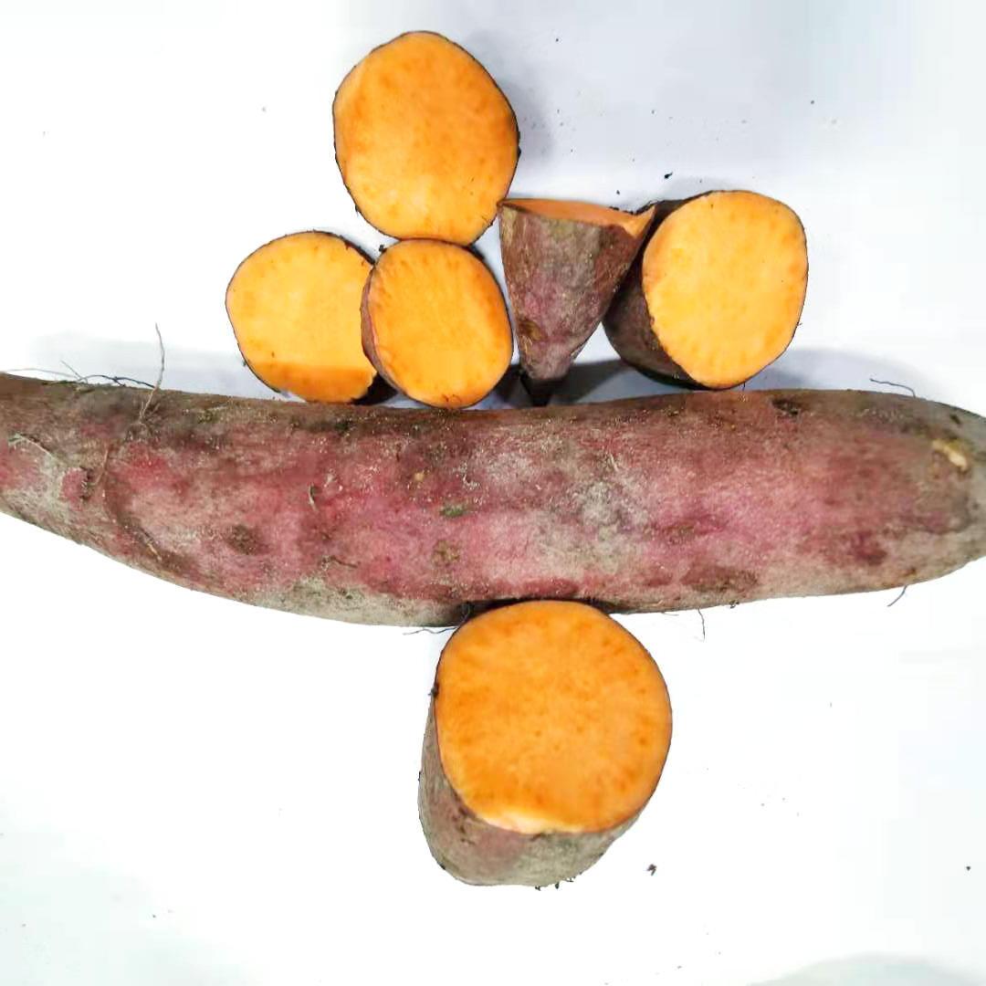 Wholesale Healthy Sweet Purple Potatoes in Bulk