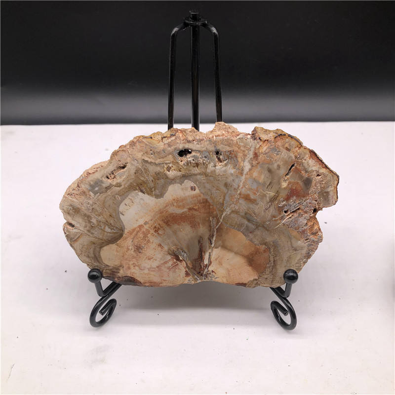 Wholesale cheapest natural stones gifts large polished wood fossils xylopal stones