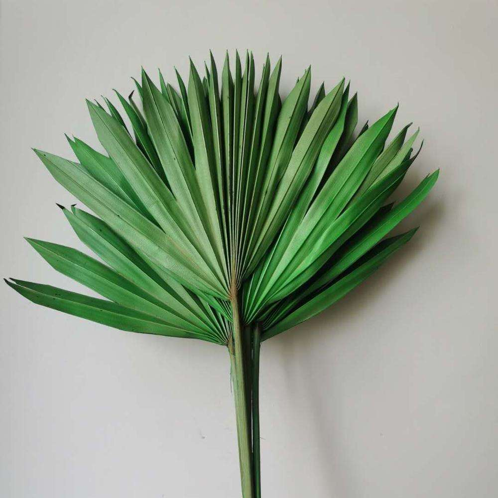 2020 New Product Release Dried Flower Small Multicolored Palm Leaf For Activity Decoration