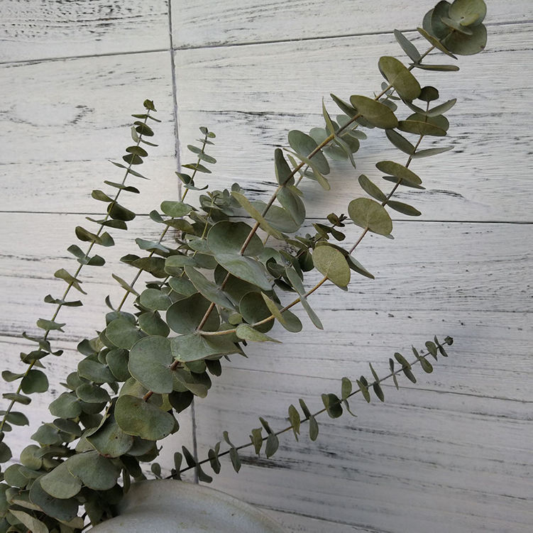 Decorative Wholesale Best Natural Dry Eucalyptus Leaf in Vase