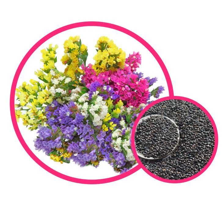 Wholesale limonium sinuatum statice flower Seeds
