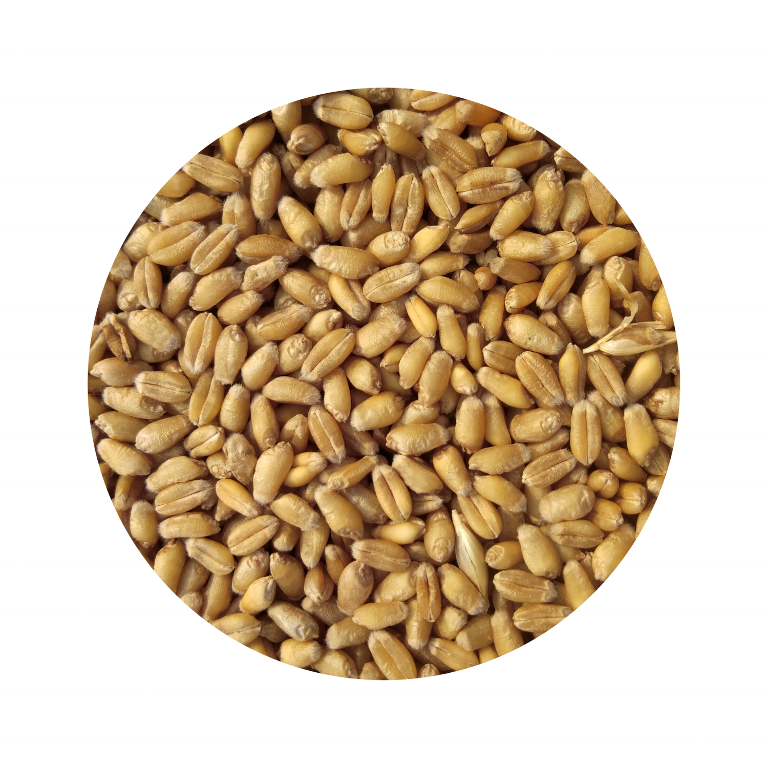 Grain Milling Wheat 500MT Agriculture Commodities