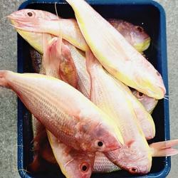 frozen golden threadfin bream