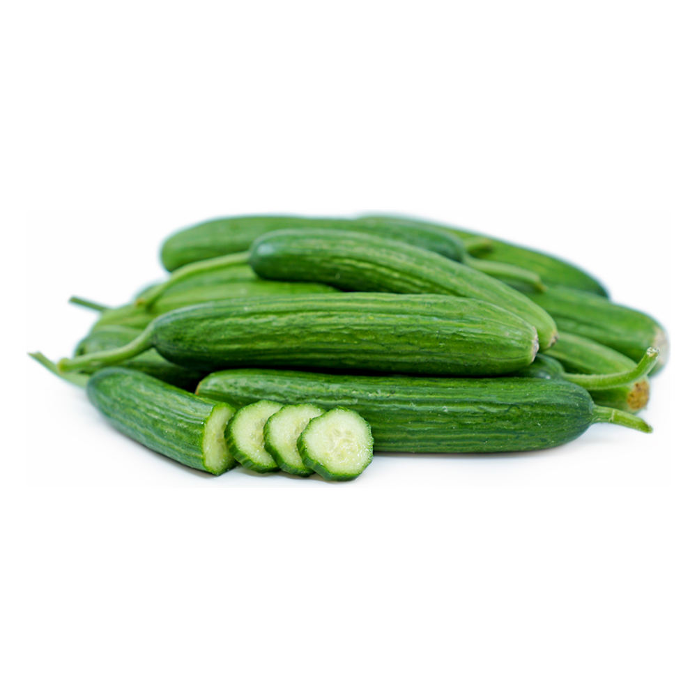 Fresh Cucumber vegetable best price