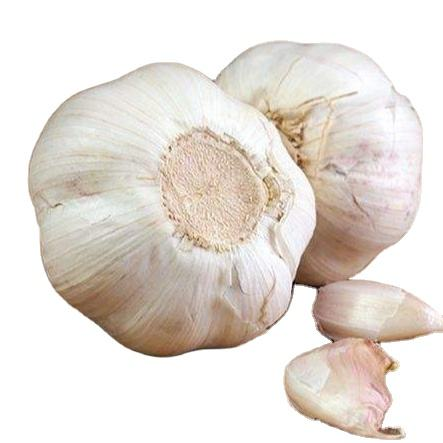Small Package Chinese Bulk Fresh Natural Purple Garlic Price