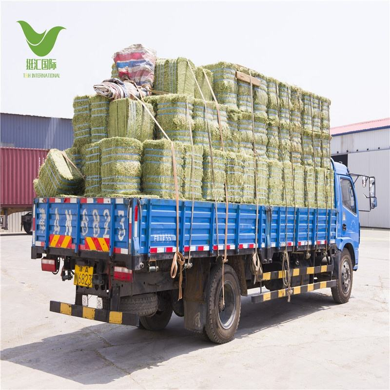 Good Quality alfalfa hay for cows and horse for wholesale