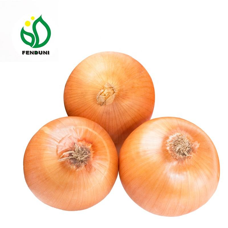 China fresh onion new price wholesale