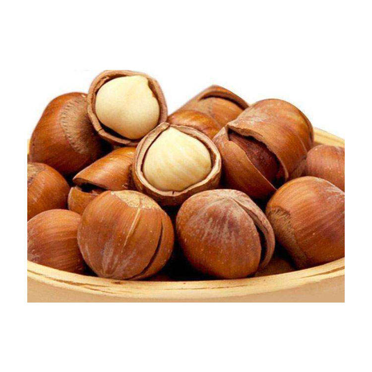 Hazelnut With Good Quality Wholesale Chinese Hazelnut Delicious Hazelnut For Sale