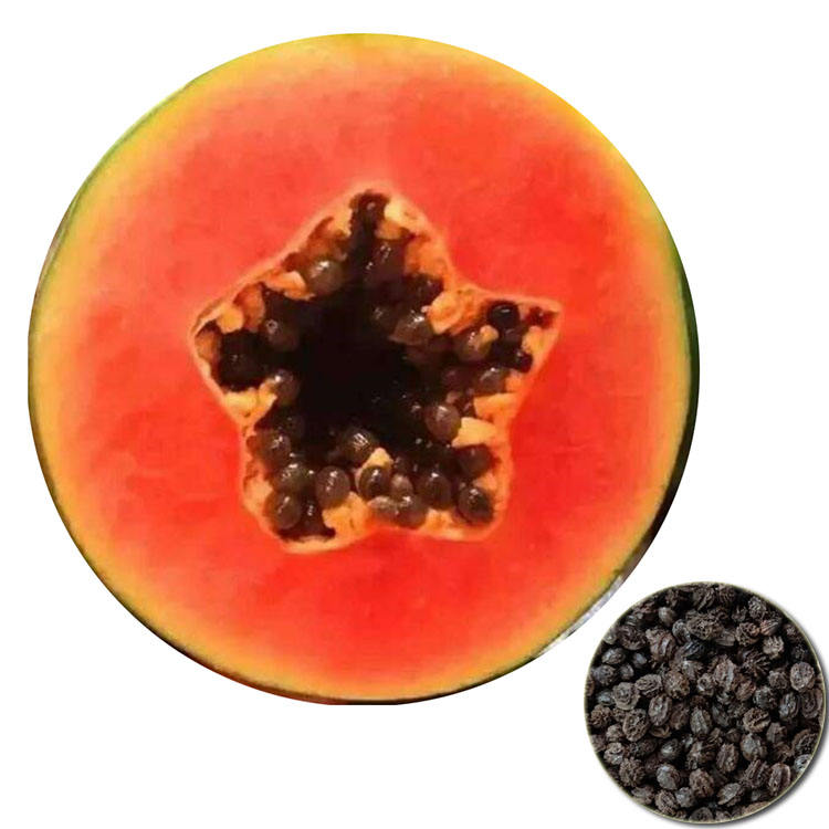 Tropical Fruit Dry Hybrid F1 Taiwan Red Lady Papaya Seeds