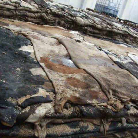 Dry salted Donkey Hides and Cow Hides/ cattle Hides/ animal skin