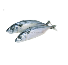 whole frozen pacific mackere fish 400600  light catching land froze seafood  hot selling