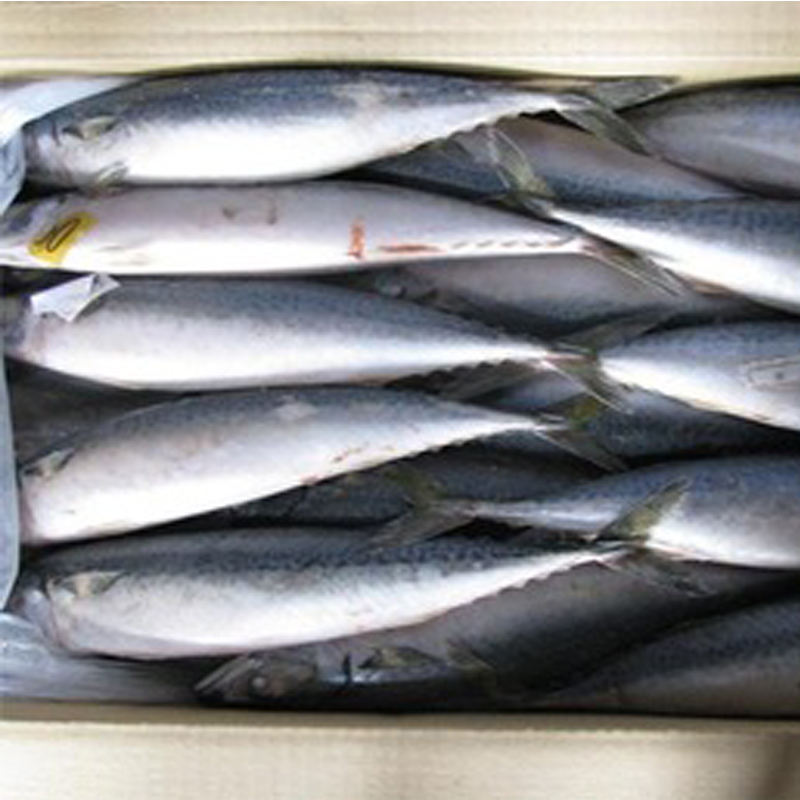 Frozen Seafood Importers / Exporters For Pacific Mackerel Fish Market Sale