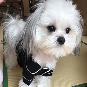 Wholesale Multi Color Comfortable High Quality Cute Small Puppy Dog special design winter dog Clothes