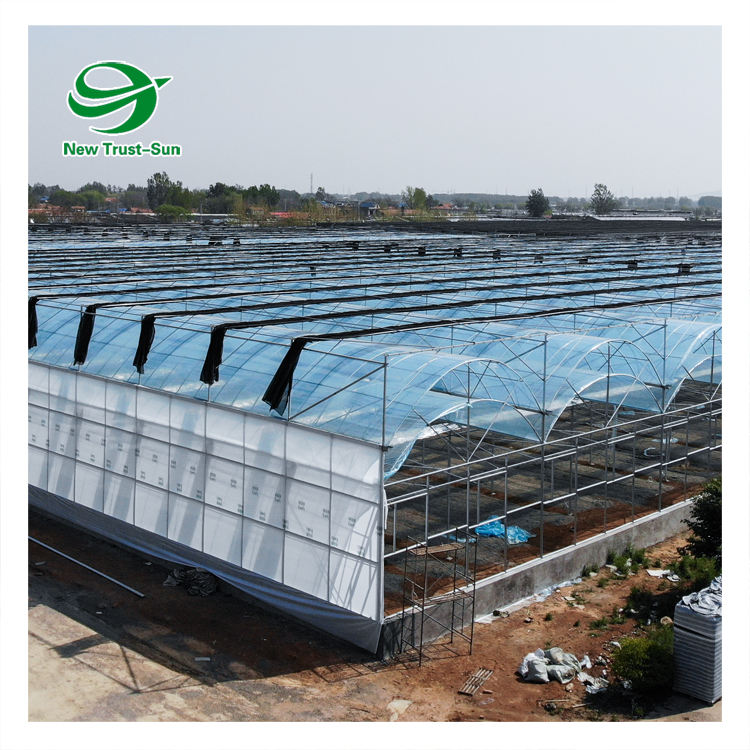 low cost complete agricultural vegetable growing multi-span tunnel pe plastic film green house