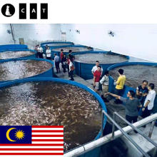 Tilapia Ras Fish Farming Equipment Aquaculture System Aquaculture Fish Farming Equipment