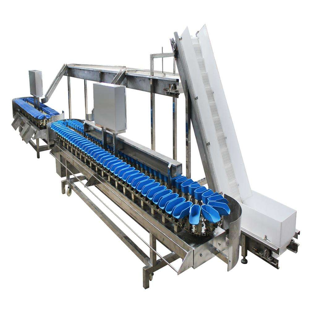 CE certificated automatic grading machine chicken feet /sea oyster weight sorting production line