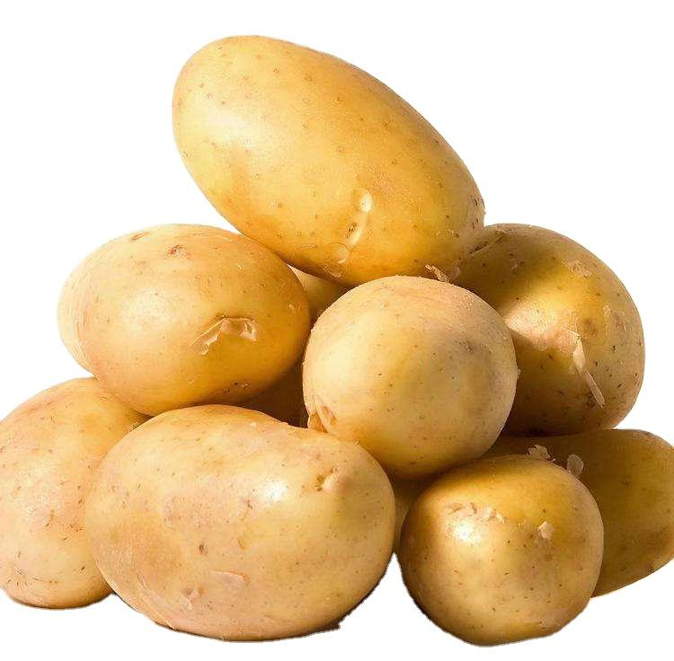 100% export quality fresh potato Holland potato sweet potato
