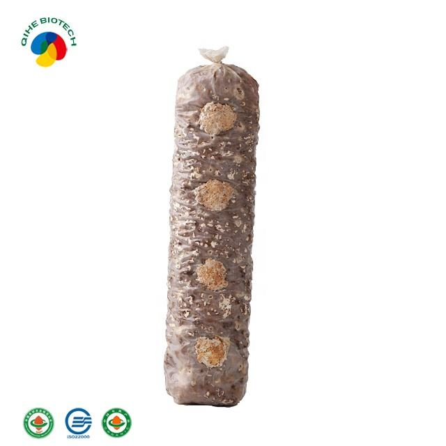 Cultivated edible fungus shiitake mushroom spawn bag pack production shiitake mushroom fresh