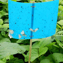 Plastic thrips pheromone blue sticky traps natural pest control