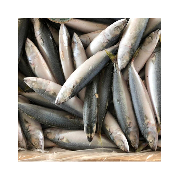 Frozen Pacific Mackerel Importers in Africa,Pacific Mackerel fish