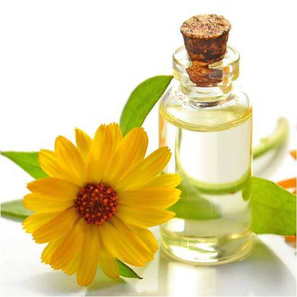 Food Additives Ambrette seed /Sun flower essential oils ,Natural Sunflower Seed Essential Oil