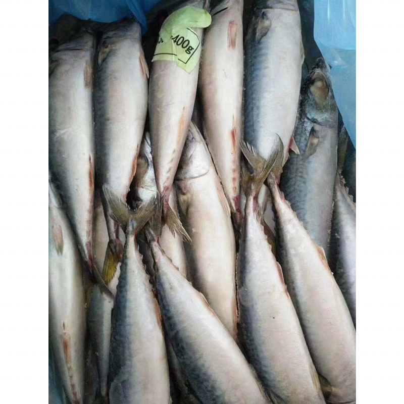 Offre Spéciale Congelé De fruits de mer Malaisien maquereau