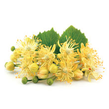100% Natural Linden Blossom Absolute Essential Oil for Bulk Purchase