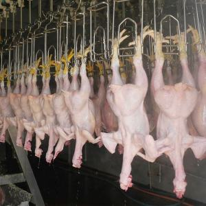 300-10000BPH Chicken Processing Line Slaughtering Machine Equipment