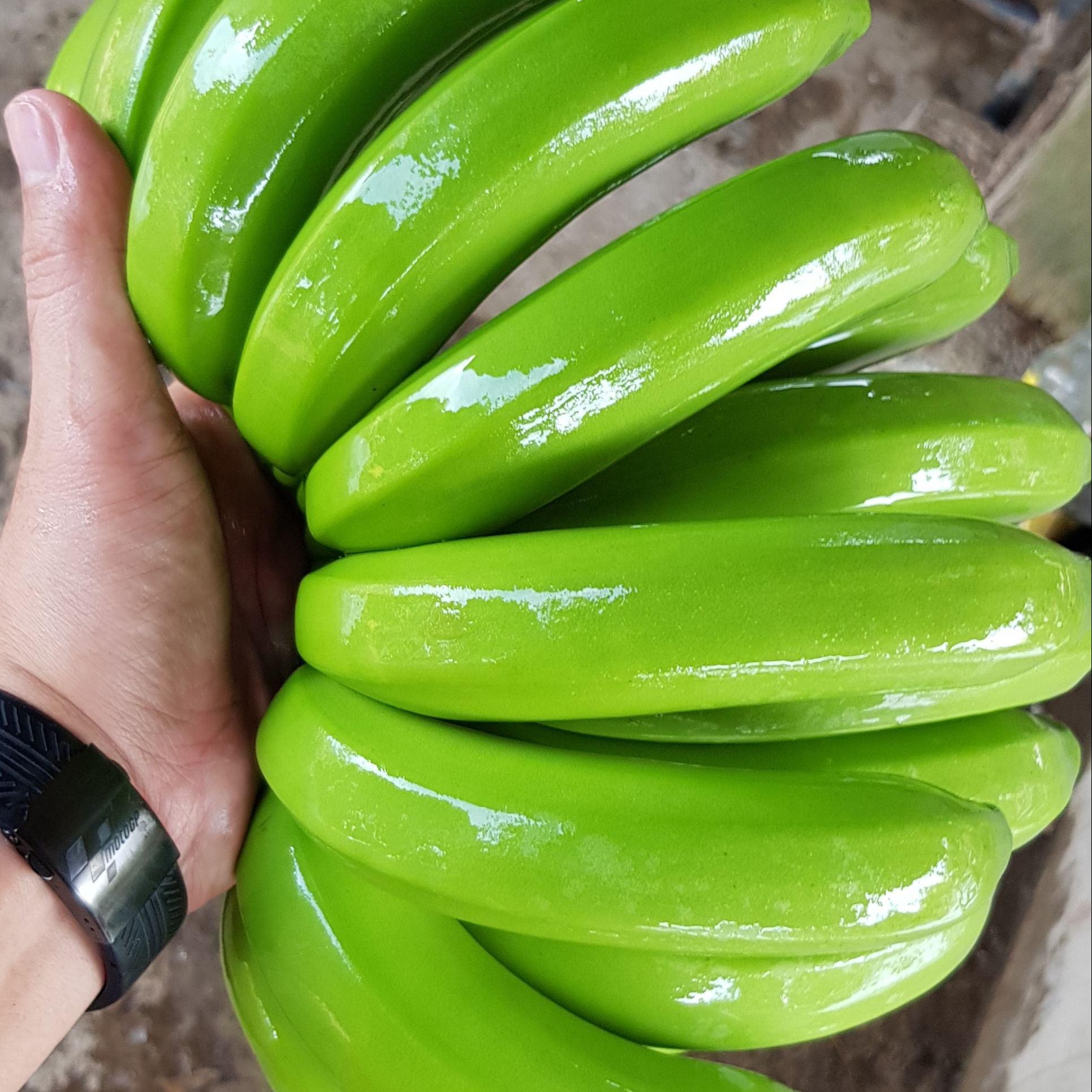 Hot Sale - High Quality Fresh Cavendish Banana