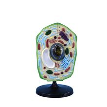High quality new style plant cell model anatomical model for science classroom study display teaching model