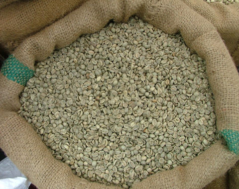 Premium Unroasted Arabica Coffee from Son La Viet Nam