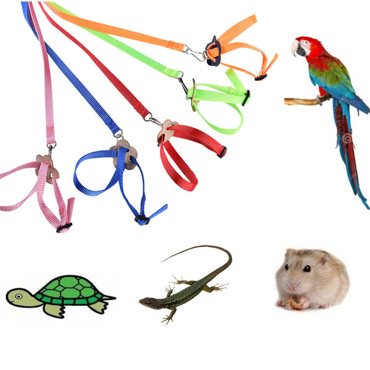 multicolor adjustable bird harness and leash A set birds harness for training Parrot leash