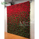 Big red rose artificial plant wall flower for wedding planning scene photo studio shooting without trimming