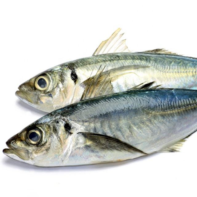 Frozen Fresh Fish Horse Mackerel 20cm+ (CARAPAU )for Africa Market