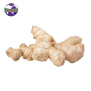 High quality organic farm planting fresh carefully selected wholesale ginger