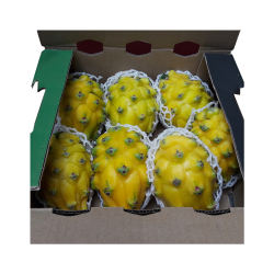 100% Natural Juicy Fresh Yellow Dragon Fruit Pitahaya Pitaya Fruit