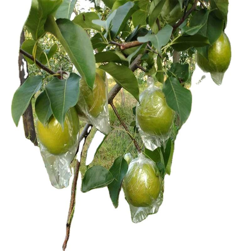 Top quality sweet juicy Chinese fresh crown delicious pear