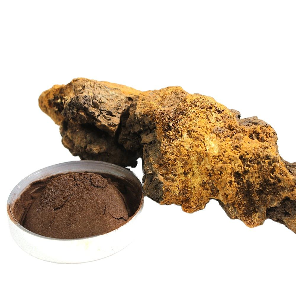 Natural chaga mushroom powder with 1% adenosine and 30% polysaccharide