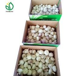 white fresh garlic of china best garlic
