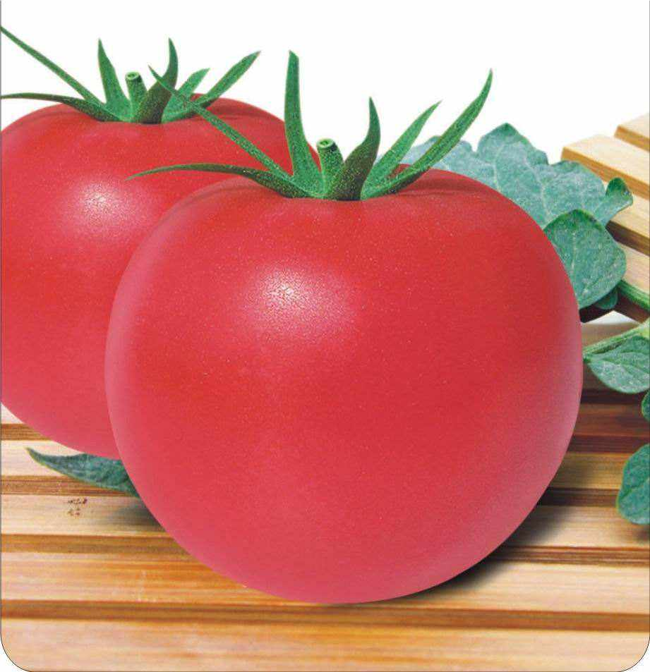 JT10 Duola TYLCV resistance hybrid tomato seeds for sale from China